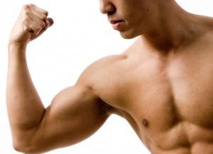 biceps på mandekrop